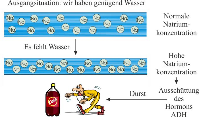 Salz_Wasserregulierung