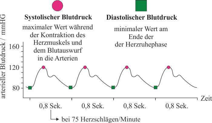Systolisch_Diastolisch_2