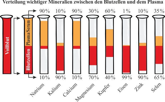 Blutzusammensetzung_Mineralien